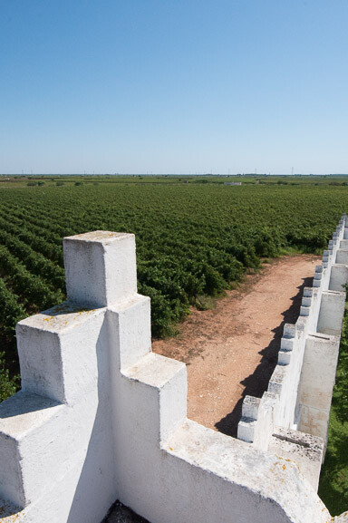 Masseri SURANI - vineyards 2